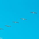 Parade of Pelicans by Barbara Shallue