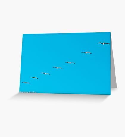 Parade of Pelicans Greeting Card