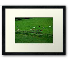 Comatose Cows... Framed Print