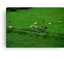 Comatose Cows... Canvas Print