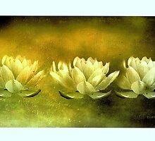 Three Lotus Flowers by Josie Duff