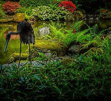 Black Heron Photographic Print