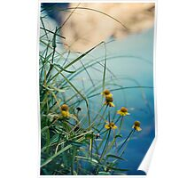 Valley View flowers Poster