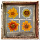 Seasons in Flowers by Peter Edwards