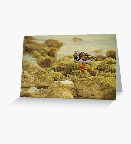 Sandpiper on the Rocks Greeting Card
