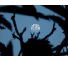 Moon Stems Photographic Print