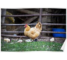 Hen and her chicks Poster