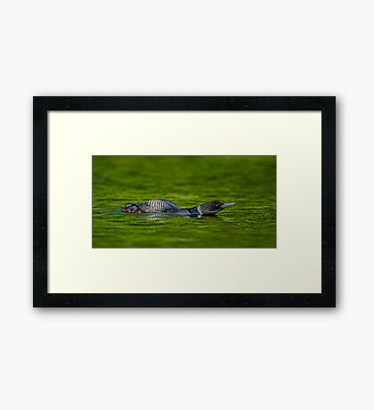 Leaning Loon  Framed Print