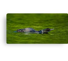 Leaning Loon  Canvas Print