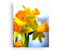 Daffodils with Soft Light Canvas Print