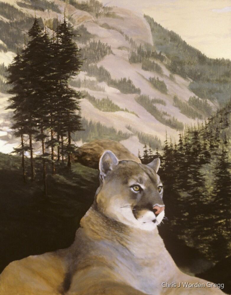 Big Montana Mountain Lion by Chris J Worden Gregg