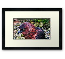 My Eco Park friend in FIJI Framed Print