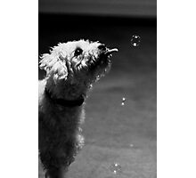 Murk + Bubble Photographic Print