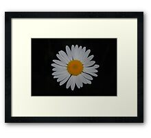 Love me... Love me not... Love me... Framed Print