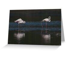 Flamingo Reflection  Greeting Card
