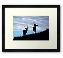Evening Bucks Framed Print