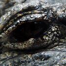 Chinese alligator eye by agenttomcat