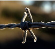 frosted wire 2 Photographic Print