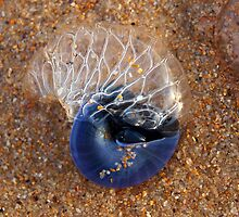 Blue Shell by geophotographic