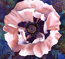 Oriental poppy (Patty's Plum?) by Jacki Stokes