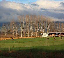 Waimea country 2 by Duncan Cunningham