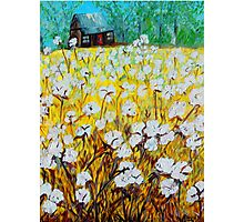 Cotton Fields Back Home Photographic Print