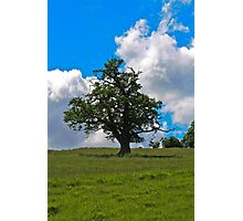 The Lonely Tree.. Photographic Print