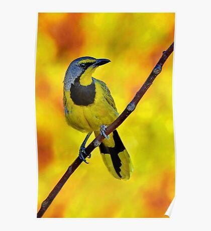 Yellow Bird......♪♫♪♪♫.......... Poster