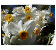 You're so vain - the Narcissus of Spring Poster