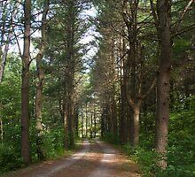 Road in woods by Mark  Spowart