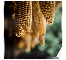 Corns Hanging From the Roof Poster