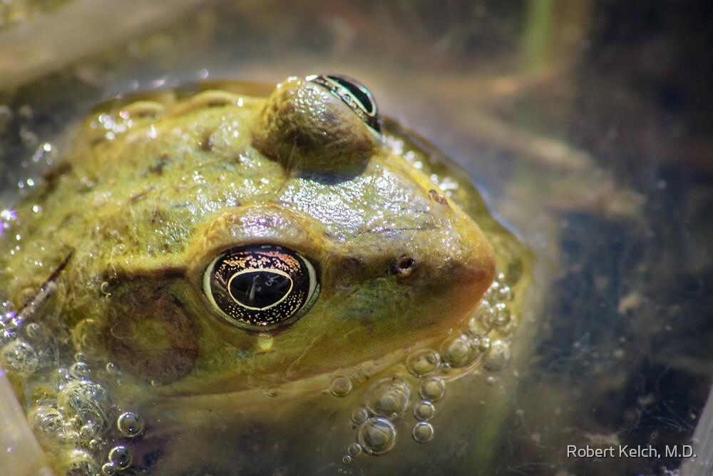 Bubbling Bull Frog by Robert Kelch, M.D.