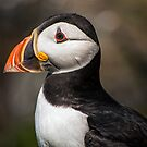 Puffin Look by FranJ