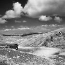 Wolf Ridge, Marin Headlands by Rodney Johnson