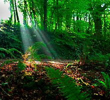 Leica Light.Woodland Fantasy.. by rennaisance