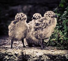 Seagull Babies by blackbush