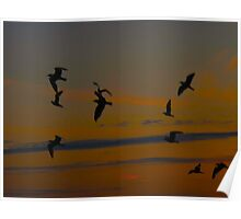 Bird party at dusk Poster