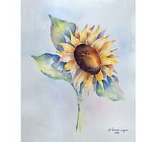 Blooming Sunflower Photographic Print