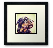 Sandy Rottweiler Framed Print