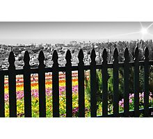Flower Fields II Photographic Print