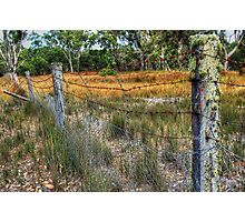Dingo Proof Fence.  Photographic Print