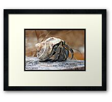 Thailand Crab Surin Islands Framed Print