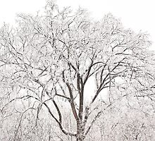 Ice Tree - Ten Million Chimes  by Rebecca Joppru Connolly