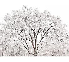 Ice Tree - Ten Million Chimes  Photographic Print