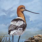 Avocet shorebird by Chris J Worden Gregg