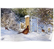 Pheasants in the snow Poster