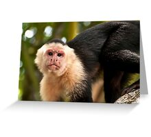White Faced Monkey Greeting Card