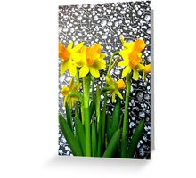 Daffodils with Black and White Greeting Card