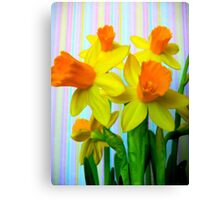 Daffodils and Stripes Canvas Print