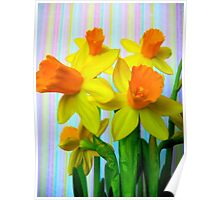 Daffodils and Stripes Poster